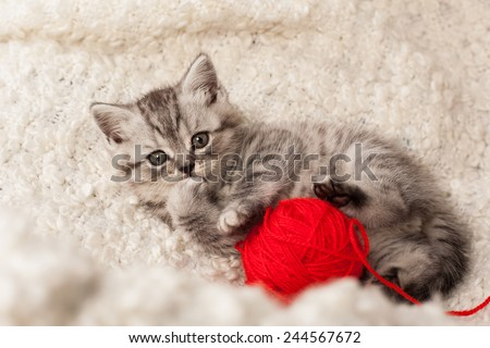nice kitten plays with threads - stock photo