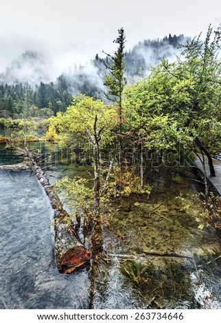 Nice lake with submerged tree trunks in the rain. Jiuzhaigou Valley was recognize by UNESCO as a World Heritage Site and a World Biosphere Reserve - China - stock photo