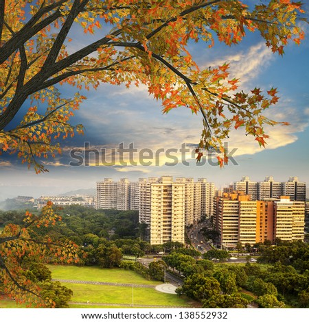 Nice maple with beautiful view - stock photo