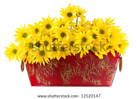 Nice Marguerites Flowers in a red bowl - stock photo