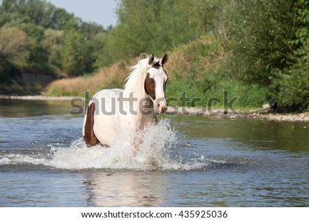 Nice paint horse running on water - stock photo