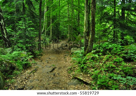 nice path through green forest - stock photo