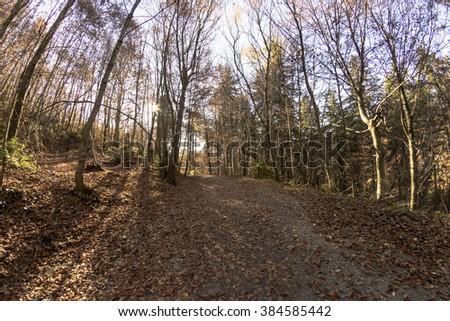 nice path through lush forest autumn - stock photo