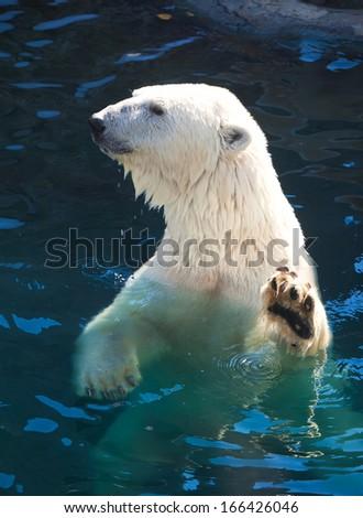 Nice photo of cute white polar bear - stock photo