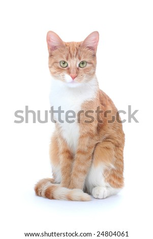nice red cat isolated on white - stock photo