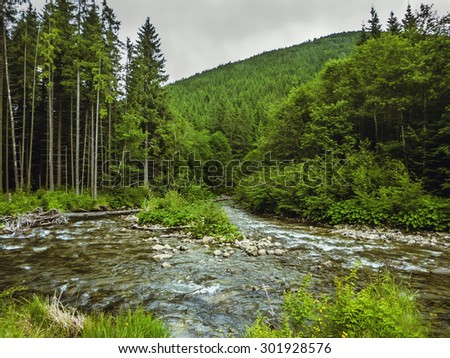 Nice scene with mountain river Prut in green Carpathian forest,  road to the village Vorokhta - stock photo