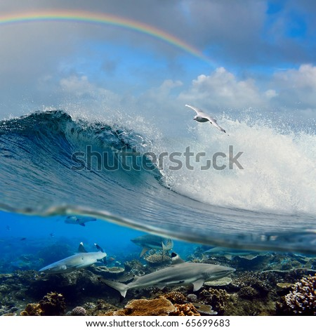 nice seascape with cloudy sky and rainbow with surfing ocean wave swirl white seagull flying above and four reef sharks underwater over coral reef - stock photo