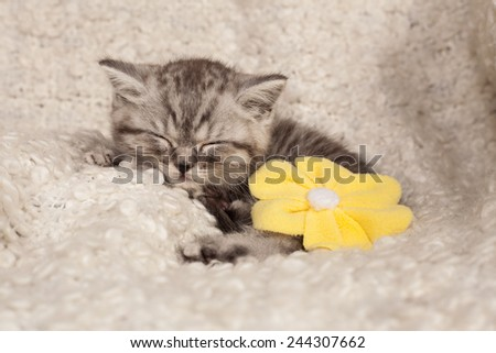 nice sleeping kitten with a flower  - stock photo