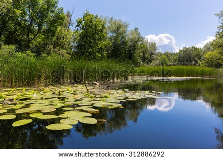 Nice summer lake scene in sunny day - stock photo
