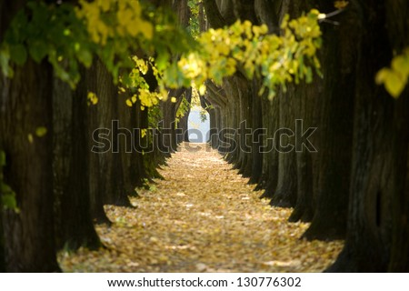 Nice tree tunnel in Lucca, Italy - stock photo