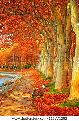 Nice trees in autumn in the city - stock photo