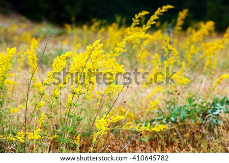 Nice view of alpine yellow flowers close up glowing by sunlight. Picturesque and gorgeous scene. Soft filter effect. Artistic picture. Beauty world. - stock photo