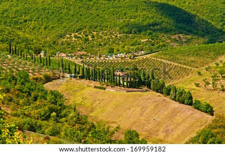 Nice vineyard in Tuscany, Italy
