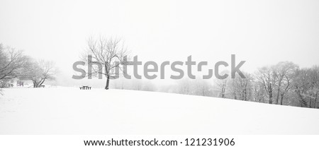 Nice winter scene - stock photo