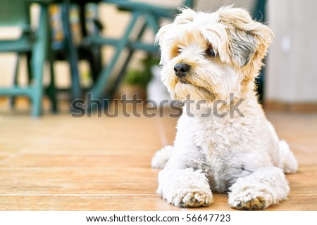 nice yorkie on bench