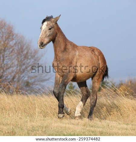 Nice young horse running in autumn freedom alone - stock photo