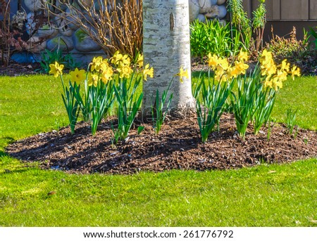 Nicely decorated front yard with some flowers at the base of the tree as a decorative elements. Landscape design. - stock photo