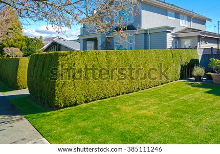 Nicely trimmed bushes, green fence and lawn at front yard of the house. Landscape design. - stock photo