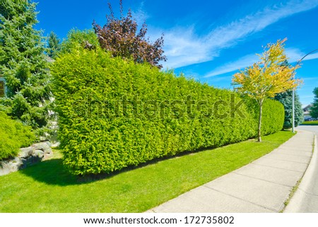 "Nicely trimmed ""Green fence ' from evergreen plants dividing the street and private property. Keeps privacy and security. Landscape trimming design. - stock photo"