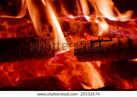 Night bonfire. Burning wood. Close-up