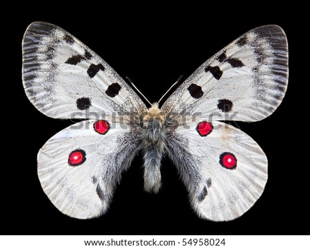 Night Butterfly isolated on black - stock photo