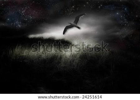 Night Flight - stock photo