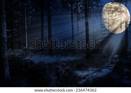 night  in a forest - stock photo