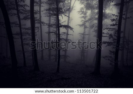 night in forest - stock photo