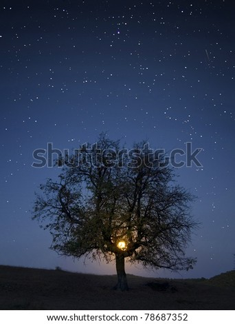 night photo with stars and moon rising through branches of a tree - stock photo