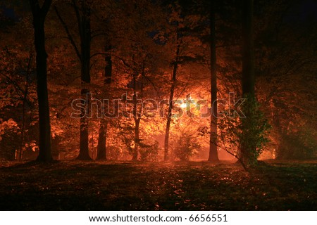 night scenery... orange light, trees, bush and fog in the park - stock photo