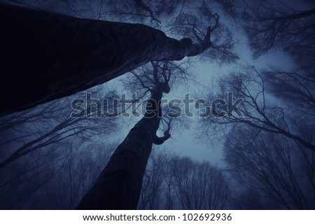 night sky seen from a dark forest - stock photo