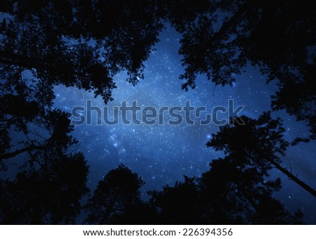 Night sky with trees - starry sky seen through trees - stock photo