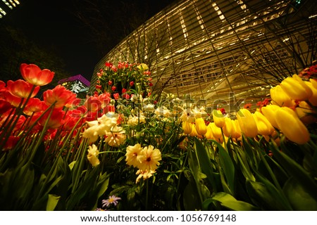 https://thumb9.shutterstock.com/display_pic_with_logo/167494286/1056769148/stock-photo-night-tulip-at-tokyo-1056769148.jpg