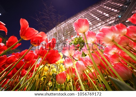 https://thumb9.shutterstock.com/display_pic_with_logo/167494286/1056769172/stock-photo-night-tulip-at-tokyo-1056769172.jpg