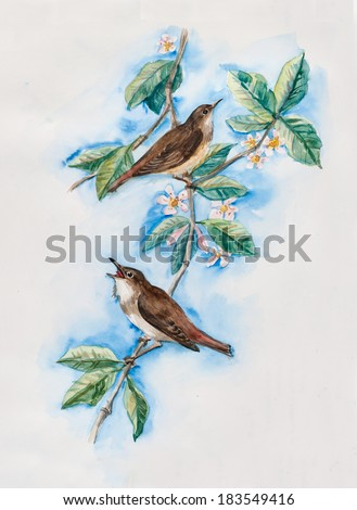 Nightingales on a branch with flowers. Decoration with wildlife scene. Pattern with birds. Water color painting. Illustration - stock photo