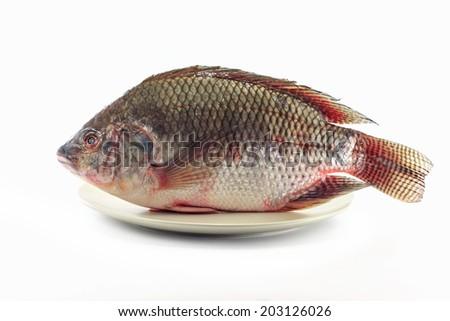Nile tilapia fishes - stock photo