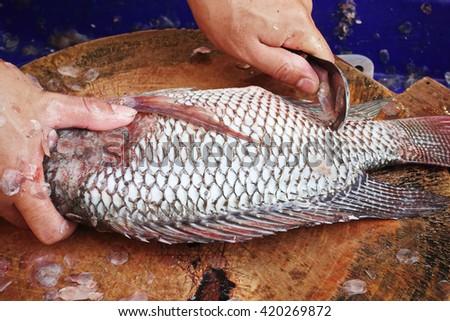 Nile tilapia fishes  freshness ingredient raw gourmet market Fresh Fish food - stock photo