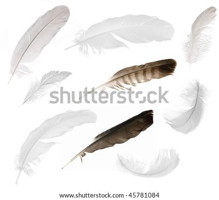 nine feathers isolated on white background - stock photo