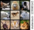 Nine mosaic photos of Canidae - stock photo