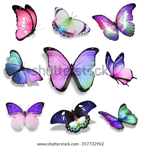 Nine violet blue pink turquoise butterflies on white background - stock photo