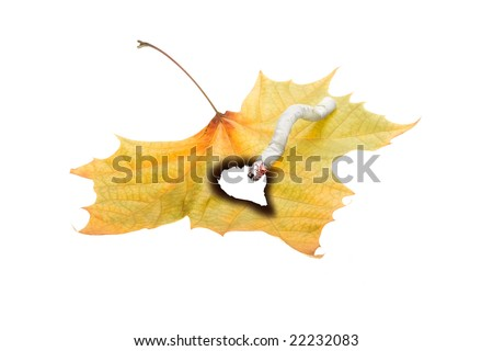 No smoking concept illustrated by cigarette burned hole in leaf isolated on white background - stock photo