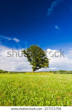 Nobody Outside Lonely Tree  - stock photo