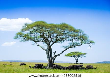 Noon in Serengeti national park - stock photo