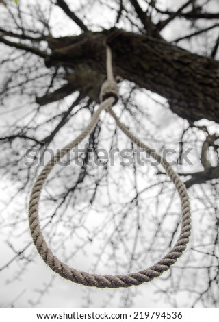 noose hanging in a tree - stock photo