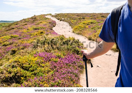 Nordic walking in Brittany. A man holding a alpenstock.  A road through the fields covered with yellow gorse and violet heather flowers. Cap Frehel, France. Travel concept. - stock photo