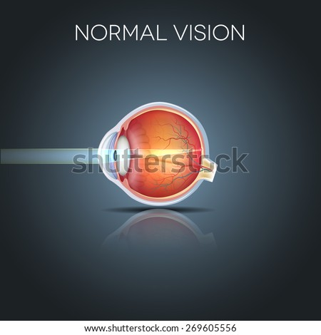 Normal eye vision, detailed anatomy of the healthy eye - stock photo