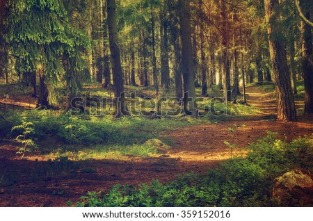 North scandinavian pine forest, Sweden natural travel outdoors vintage hipster background - stock photo