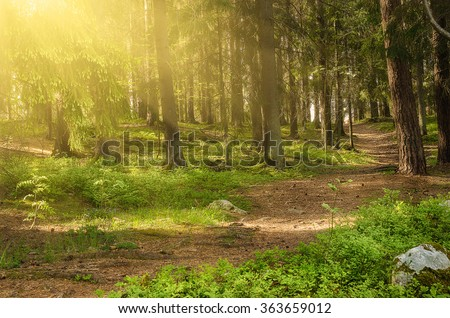 North scandinavian pine sunny forest with path and stones, Sweden natural travel outdoors background - stock photo