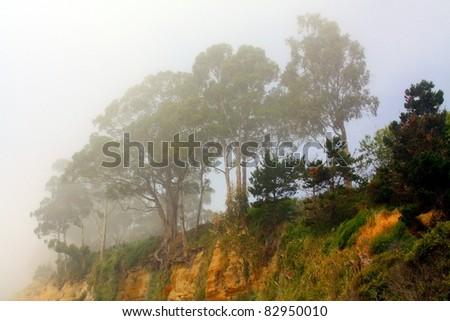 Northern California coastline under fog - stock photo