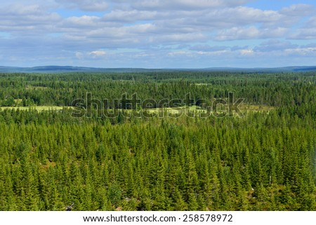 Northern endless forests. Finland, Lapland - stock photo